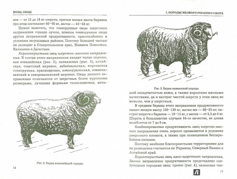 Иллюстрация 1 из 7 для Козы, овцы. Разведение и уход | Лабиринт - книги. Источник: Лабиринт