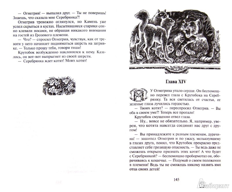 Иллюстрация 1 из 12 для Лес секретов - Эрин Хантер | Лабиринт - книги. Источник: Лабиринт