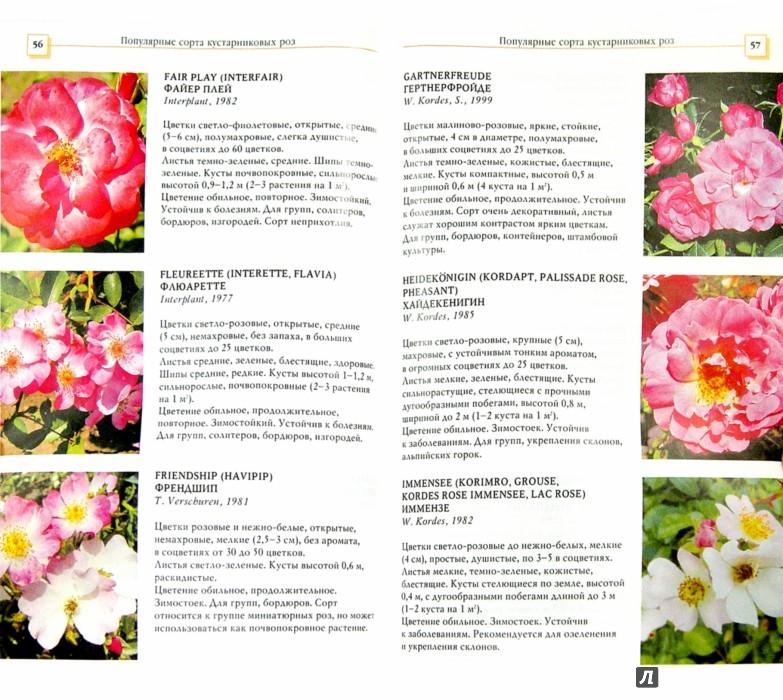 Иллюстрация 1 из 14 для Кустарниковые розы - Л.И. Бумбеева | Лабиринт - книги. Источник: Лабиринт