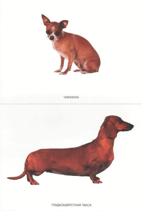 Иллюстрация 1 из 21 для Мир в картинках: Собаки. Друзья и помощники: 3-7 лет | Лабиринт - книги. Источник: Лабиринт