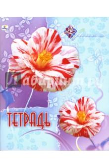 Тетрадь 48 листов клетка (ТК7481202,203,204,205)