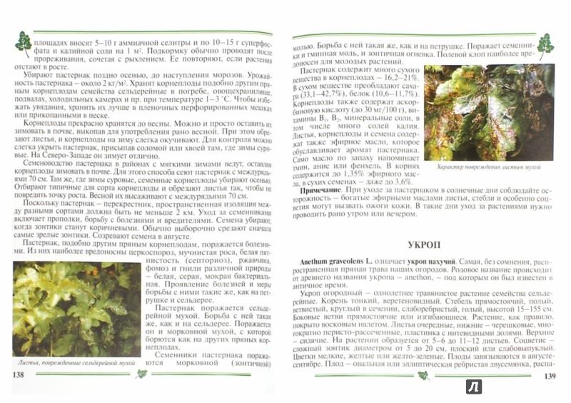 Иллюстрация 1 из 13 для Пряно-вкусовые овощи. Пособие для садоводов-любителей - Гиренко, Зверева | Лабиринт - книги. Источник: Лабиринт