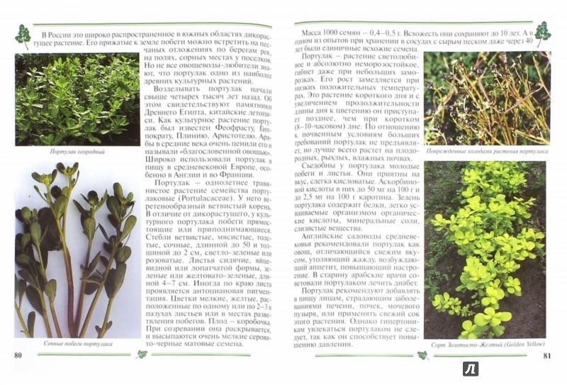 Иллюстрация 1 из 5 для Зеленные овощи. Пособие для садоводов-любителей - Гиренко, Зверева | Лабиринт - книги. Источник: Лабиринт