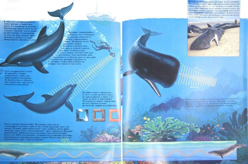 Иллюстрация 1 из 14 для Киты   Лабиринт - книги. Источник: Лабиринт