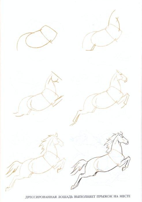 Иллюстрация 1 из 24 для Рисуем 50 лошадей - Ли Эймис   Лабиринт - книги. Источник: Лабиринт