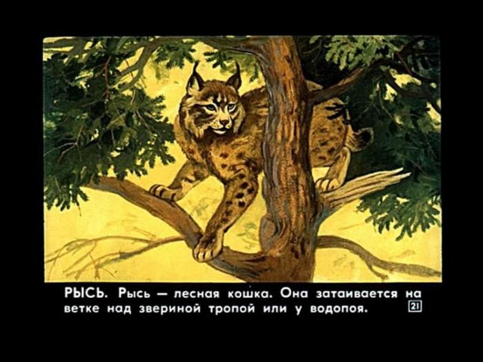 Иллюстрация 1 из 18 для Наши добрые сказки 13: Диафильмы (DVD-Box) - Снегирев, Грибачев | Лабиринт - видео. Источник: Лабиринт