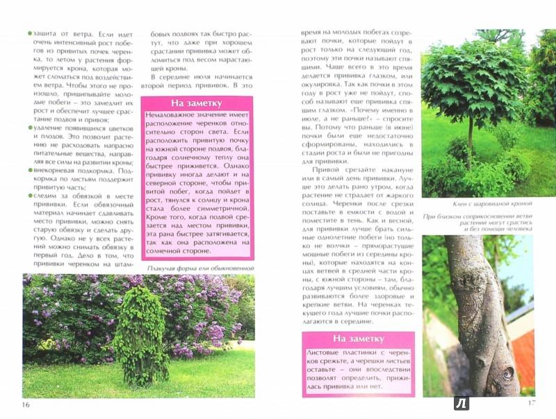 Иллюстрация 1 из 17 для Прививаем декоративные и плодовые растения - Ирина Бондорина | Лабиринт - книги. Источник: Лабиринт