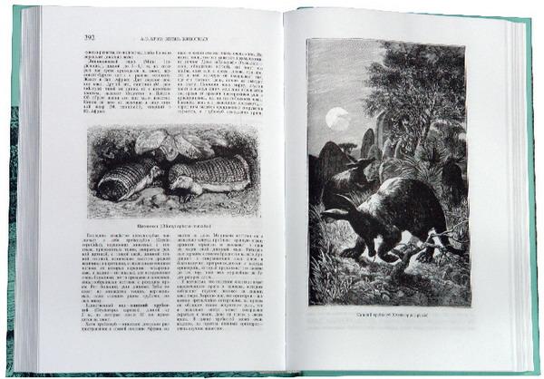 Иллюстрация 1 из 8 для Жизнь животных. В трех томах. Том 1. Млекопитающие - Альфред Брэм | Лабиринт - книги. Источник: Лабиринт