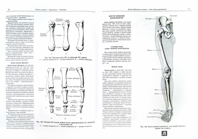 Иллюстрация 1 из 30 для Атлас анатомии человека. В 4-х томах. Том 1. Учебное пособие - Синельников, Синельников, Синельников | Лабиринт - книги. Источник: Лабиринт