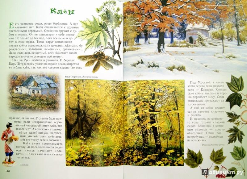 Иллюстрация 1 из 88 для Прогулки по лесу - Сергей Махотин | Лабиринт - книги. Источник: Лабиринт