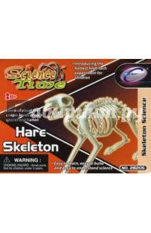 Скелет кролика (28205)