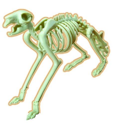 Иллюстрация 1 из 3 для Скелет кролика (28205) | Лабиринт - игрушки. Источник: Лабиринт