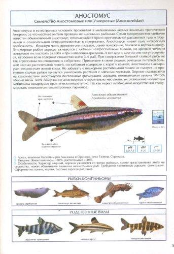 Иллюстрация 1 из 16 для Все о самых популярных аквариумных рыбках. Атлас-справочник | Лабиринт - книги. Источник: Лабиринт