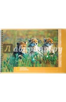 """Альбом для рисования 32 листа А4 (2727) """"Три гепарда"""""""