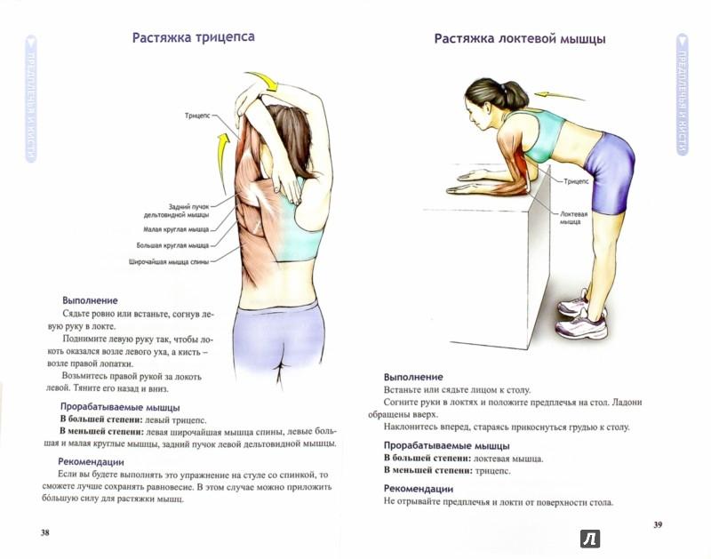 Иллюстрация 1 из 34 для Анатомия упражнений на растяжку - Нельсон, Кокконен   Лабиринт - книги. Источник: Лабиринт
