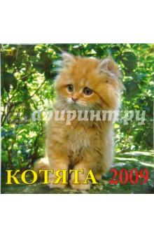 Календарь 2009 Котята (70805)