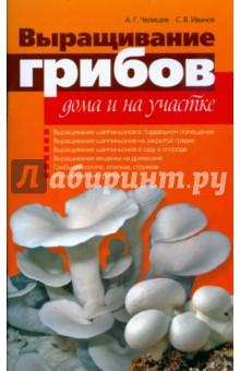 Выращивание грибов дома и на участке