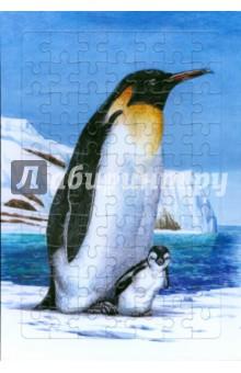 Развивающие рамки. Живая природа. Пингвин