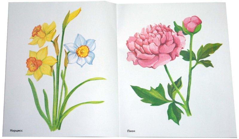 Иллюстрация 1 из 17 для Садовые цветы в картинках. Наглядное пособие для педагогов, логопедов, воспитателей и родителей | Лабиринт - книги. Источник: Лабиринт