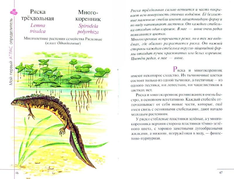 Иллюстрация 1 из 15 для Атлас: Растения водоема (7932) - Козлова, Сивоглазов   Лабиринт - книги. Источник: Лабиринт
