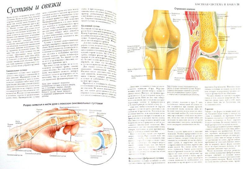 Иллюстрация 1 из 41 для Анатомический атлас - Т. Уэстон | Лабиринт - книги. Источник: Лабиринт
