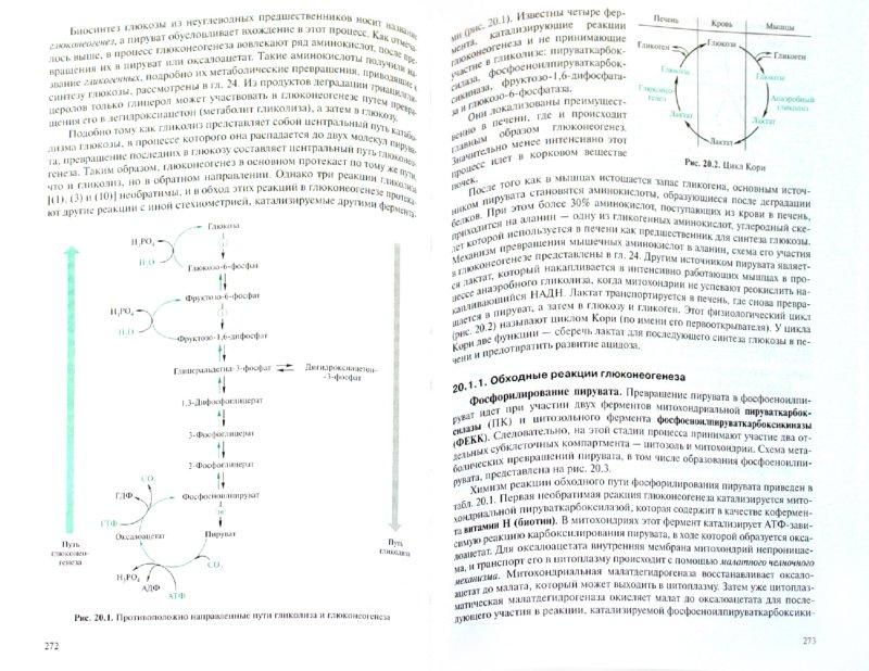 Иллюстрация 1 из 11 для Биохимия (3327) - Комов, Шведова | Лабиринт - книги. Источник: Лабиринт