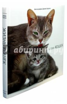 Жизнь кошекКошки<br>Все мы умиляемся при виде новорожденного котенка и восхищаемся бесстрашной независимостью котов. Жизнь кошек - это многогранный и удивительный мир, который людям никогда не понять до конца. Однако открыв эту книгу и увидев фотографии любознательных и робких котят и заботливых кошек-матерей, столичных охотников и домашних сонных бездельников, вы удивитесь, какую яркую и разнообразную жизнь ведут ваши любимые кошки.<br>Фотографии Джейн Бартон.<br>