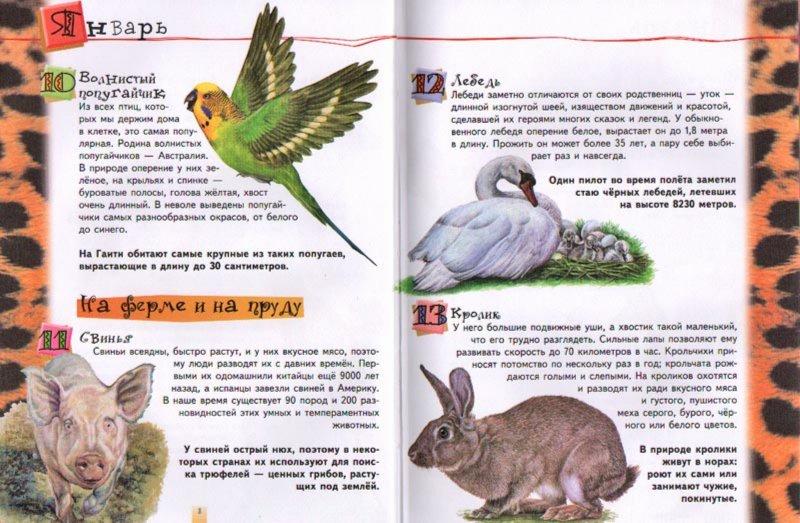 Иллюстрация 1 из 16 для 365 удивительных фактов о животных   Лабиринт - книги. Источник: Лабиринт