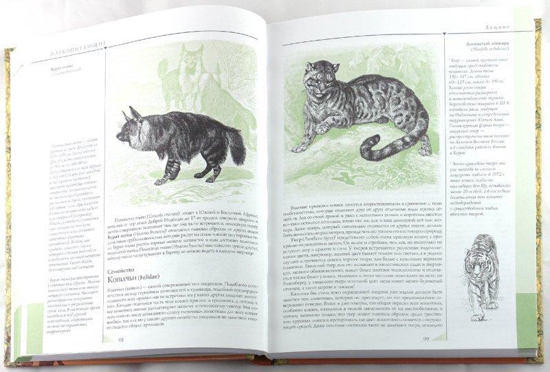 Иллюстрация 1 из 16 для Жизнь животных. Самая важная и интересная информация, дополненная современными данными - Альфред Брем | Лабиринт - книги. Источник: Лабиринт