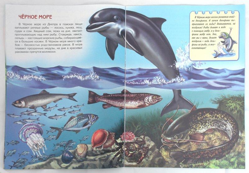 Иллюстрация 1 из 10 для Подводный мир. Книжки для любознательных - Юлия Школьник | Лабиринт - книги. Источник: Лабиринт