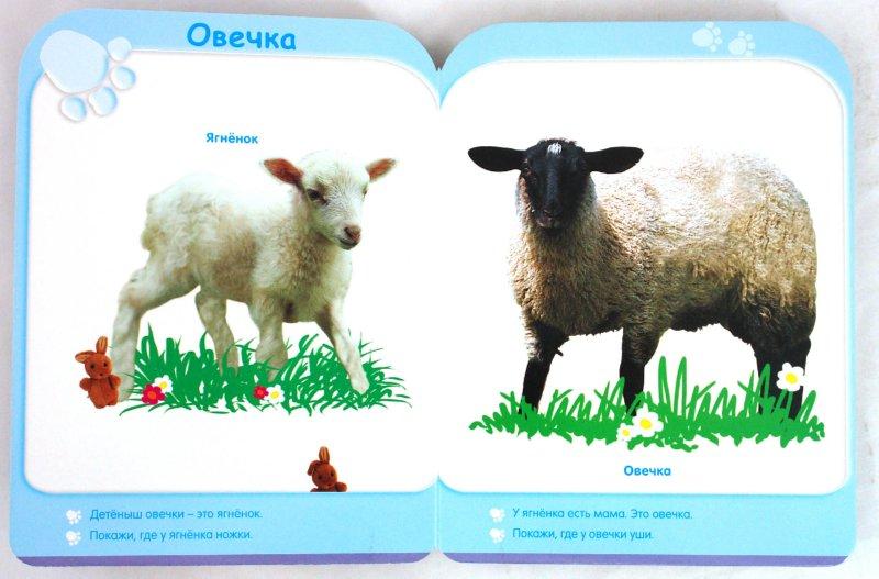 Иллюстрация 1 из 15 для Кто это такой? (12-18 мес.)   Лабиринт - книги. Источник: Лабиринт