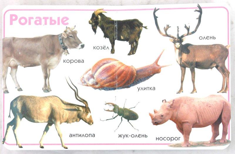 Иллюстрация 1 из 12 для Животные | Лабиринт - книги. Источник: Лабиринт