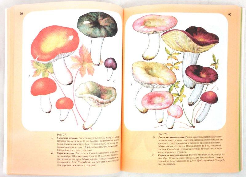 Иллюстрация 1 из 34 для Большой определитель грибов - Александр Юдин | Лабиринт - книги. Источник: Лабиринт