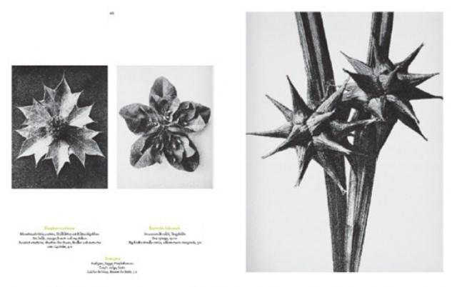 Иллюстрация 1 из 7 для Karl Blossfeldt. The complete published work - Hans Adam | Лабиринт - книги. Источник: Лабиринт