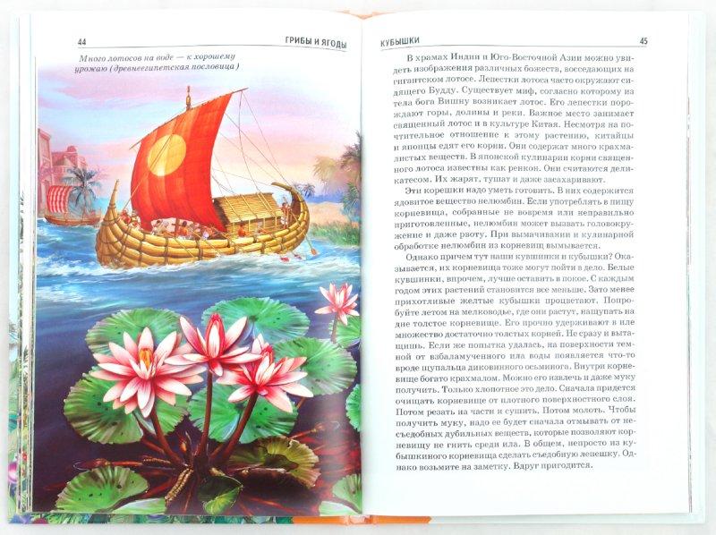 Иллюстрация 1 из 31 для Грибы и ягоды - Сергей Афонькин | Лабиринт - книги. Источник: Лабиринт