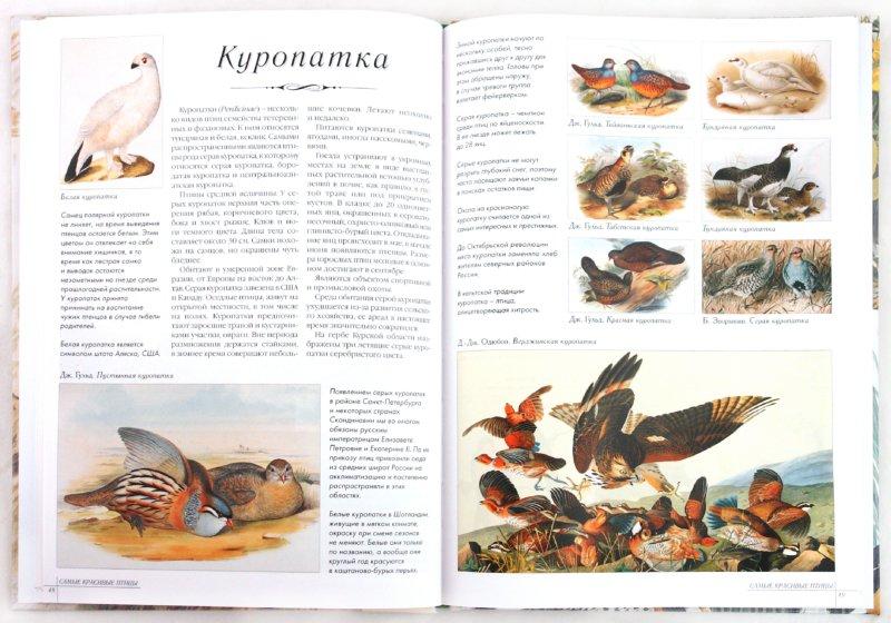 Иллюстрация 1 из 31 для Самые красивые птицы | Лабиринт - книги. Источник: Лабиринт