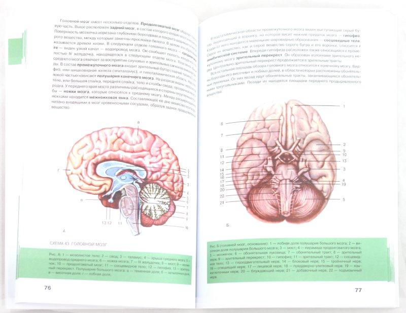 Иллюстрация 1 из 5 для Анатомия человека | Лабиринт - книги. Источник: Лабиринт