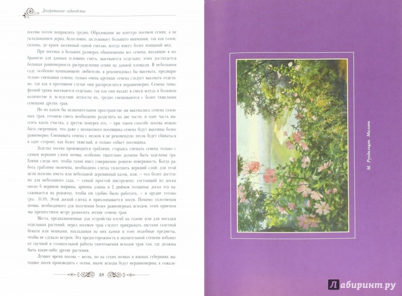 Иллюстрация 1 из 6 для Декоративное садоводство - Павел Штейнберг | Лабиринт - книги. Источник: Лабиринт