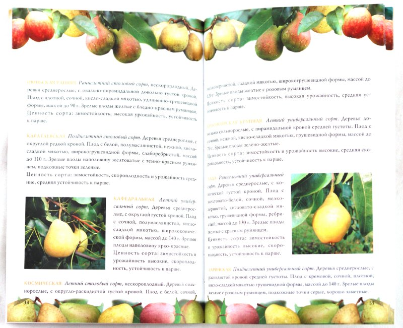 Иллюстрация 1 из 10 для Груша. Сорта, посадка, уход - Криворучко, Горбунов | Лабиринт - книги. Источник: Лабиринт