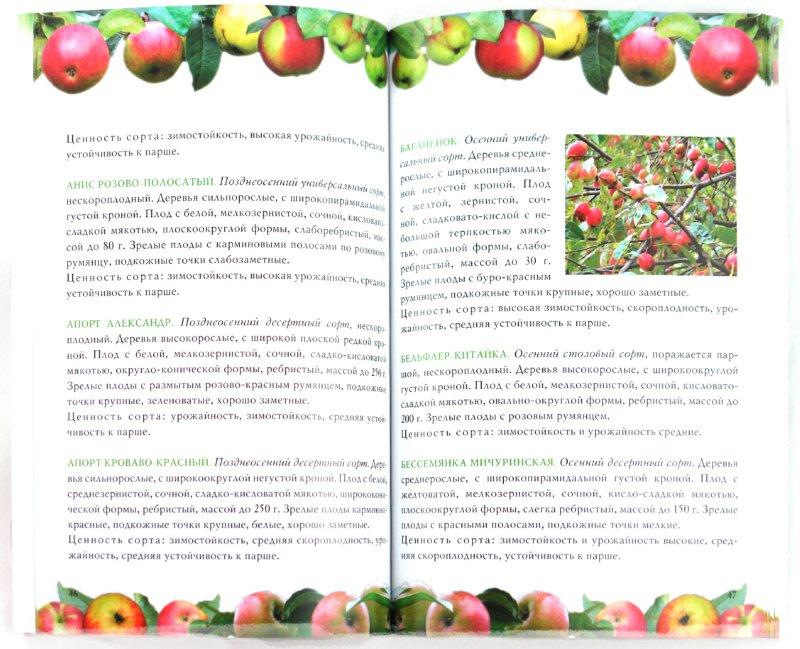 Иллюстрация 1 из 10 для Яблоня - Криворучко, Горбунов   Лабиринт - книги. Источник: Лабиринт