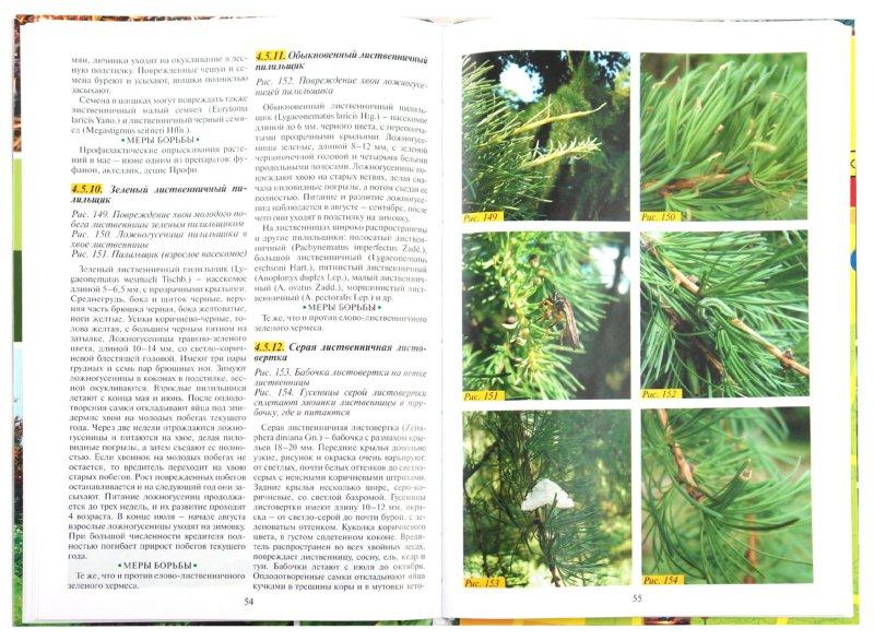 Иллюстрация 1 из 30 для Болезни и вредители хвойных растений - Любовь Трейвас | Лабиринт - книги. Источник: Лабиринт