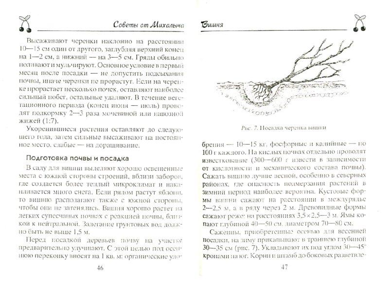 Иллюстрация 1 из 7 для Вишня, черешня. Сорта, выращивание, уход, заготовки - Николай Звонарев | Лабиринт - книги. Источник: Лабиринт