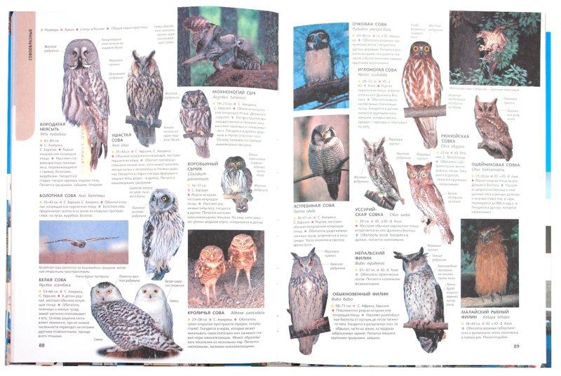 Иллюстрация 1 из 11 для 1500 самых удивительных птиц | Лабиринт - книги. Источник: Лабиринт