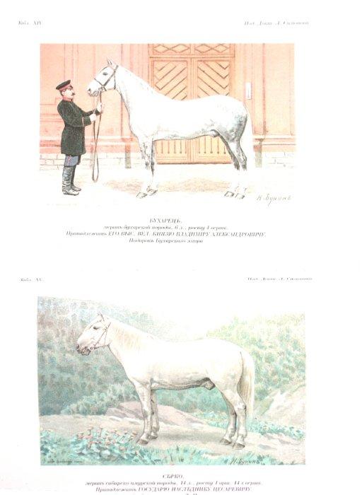 Иллюстрация 1 из 11 для Лошади. Конские породы - Симонов, Мердер | Лабиринт - книги. Источник: Лабиринт