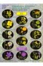 Определитель травянистых растений по цветкам. Растения лугов и полей. 6-11 классы