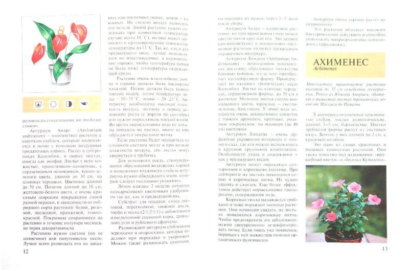 Иллюстрация 1 из 10 для Красивоцветущие комнатные растения - Ольга Блейз | Лабиринт - книги. Источник: Лабиринт