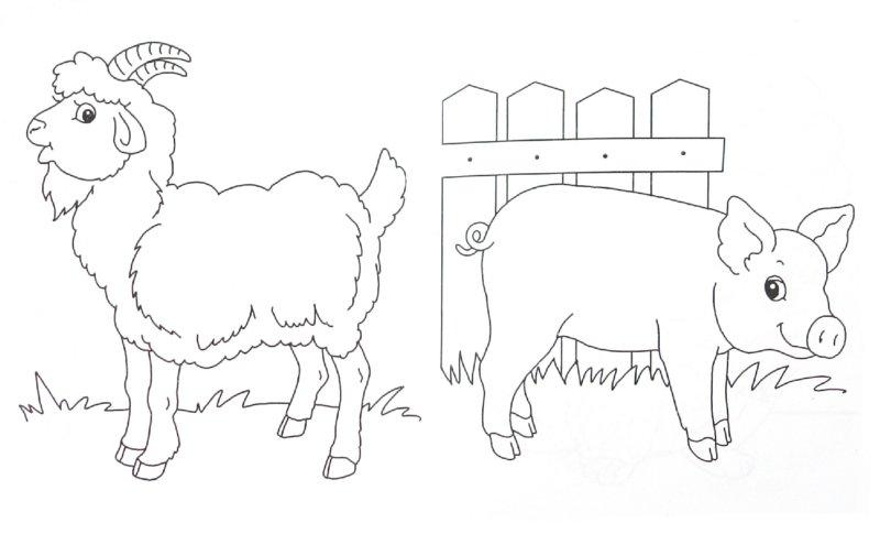 Иллюстрация 1 из 5 для Домашний зоопарк | Лабиринт - книги. Источник: Лабиринт