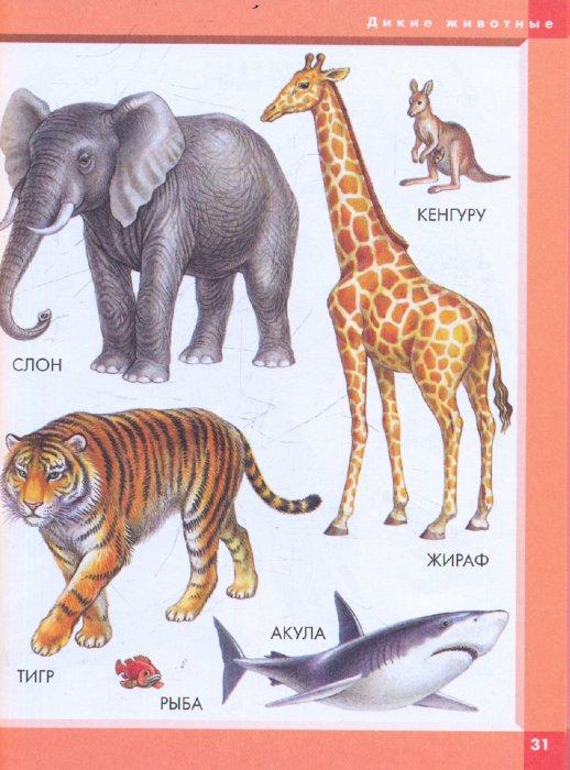 Иллюстрация 1 из 9 для Моя первая книга: Словарь в картинках   Лабиринт - книги. Источник: Лабиринт