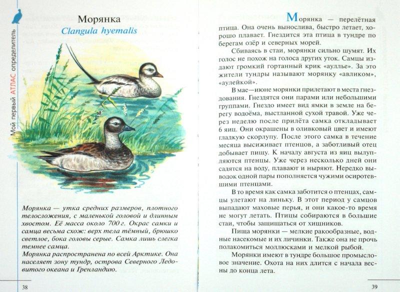 Иллюстрация 1 из 5 для Птицы Арктики - Сивоглазов, Овсянникова | Лабиринт - книги. Источник: Лабиринт