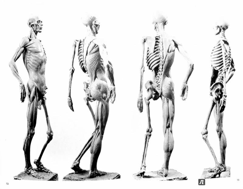 Иллюстрация 1 из 7 для Моделирование фигуры человека - Маргит Мальстром | Лабиринт - книги. Источник: Лабиринт